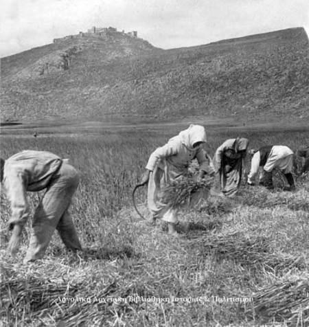 Παραδοσιακή μέθοδος μαζέματος της σοδειάς των δημητριακών στην πεδιάδα του Άργους. Στο βάθος η Ακρόπολη της Λάρισας (1901).