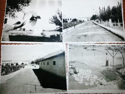 Άνθρωποι, ζώα, δέντρα και κτίρια της Αγροτικής Φυλακής Τίρυνθας, όπως απεικονίζονται σε σπάνιο φωτογραφικό υλικό της δεκαετίας του 1950 (ιστορικό αρχείο Α.Φ. Τίρυνθας)
